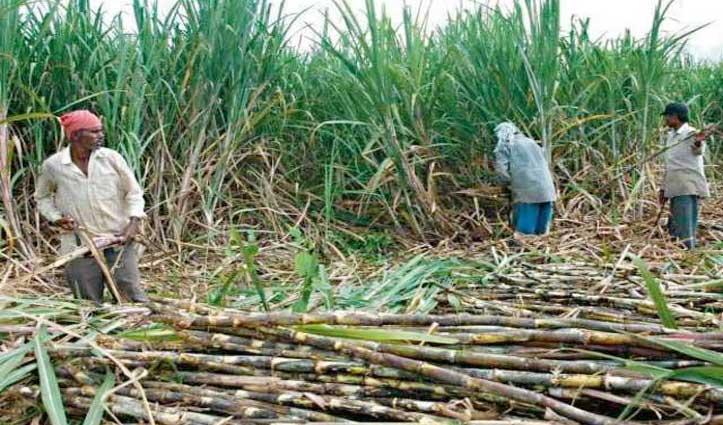 #Modi_Cabinet बड़ा फैसला : गन्ना किसानों को मिलेगी #Subsidy, 60 लाख टन चीनी निर्यात करेगी सरकार