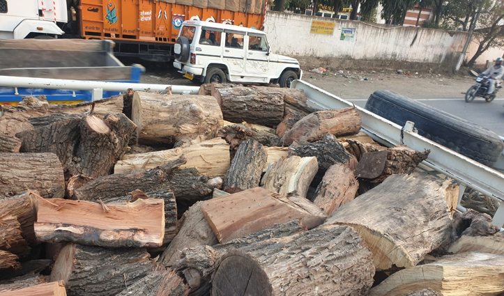 कालाअंब में अवैध लकड़ी से भरी पिकअप पकड़ी, Haryana ले जा रहा था चालक