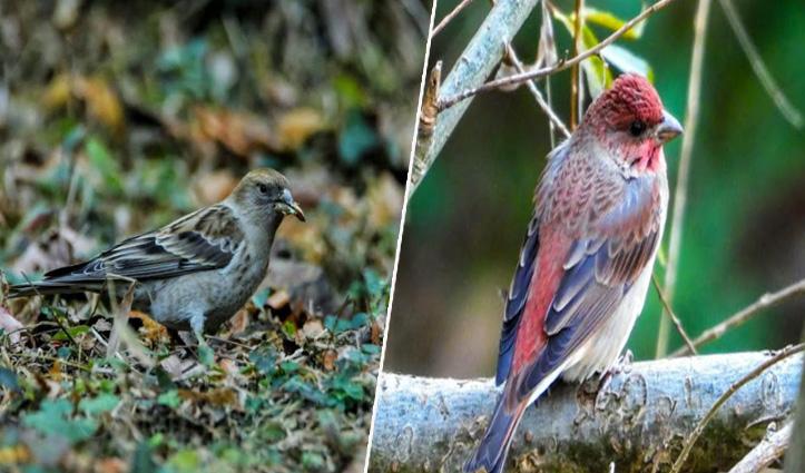 #Shimla: सर्दियों में पक्षियों की 10 प्रजातियों ने दी दस्तक, संतोष ठाकुर ने की रिपोर्ट