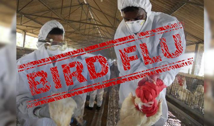 क्या है Bird flu, जानिए क्या हैं इसके लक्षण और क्यों मार दिए जाते हैं पक्षी-मुर्गियां