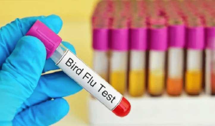 Una में मृत पाए गए कबूतर व कौवों में नहीं निकला Bird Flu, टेस्ट रिपोर्ट नेगेटिव