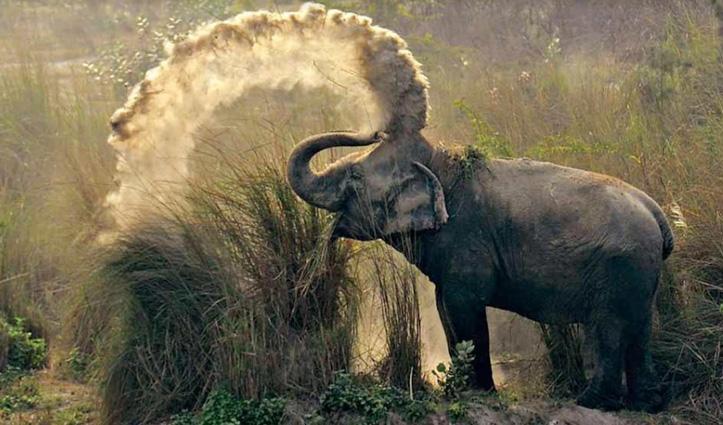 #Uttarakhand जिम कॉर्बेट नेशनल पार्क के हाथी की करंट लगने से मौत
