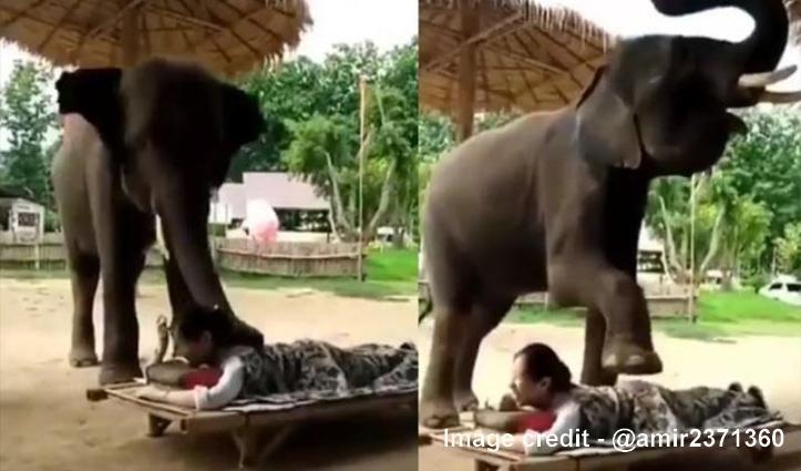 हाथी कर रहा महिला की मालिश, Video देखकर आप रह जाएंगे हैरान
