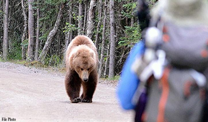 Chamba : रात के अंधेरे में भालू ने नोचा पैदल जा रहा व्यक्ति, पढ़ें पूरी घटना