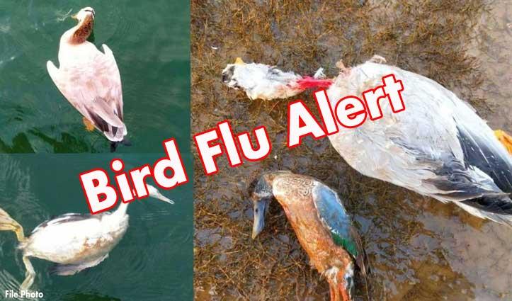 ..तो #Birdflu के अलावा यह भी हो सकता है पक्षियों के मरने का कारण- जानिए