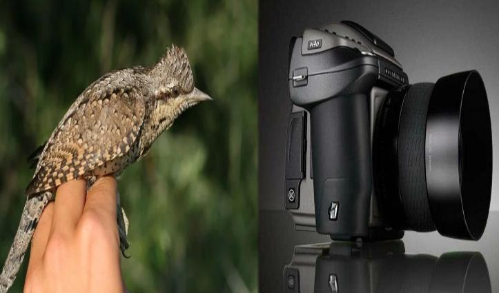 Superstition : कहीं Camera से डरते हैं लोग तो कहीं एक Bird लाता है मौत