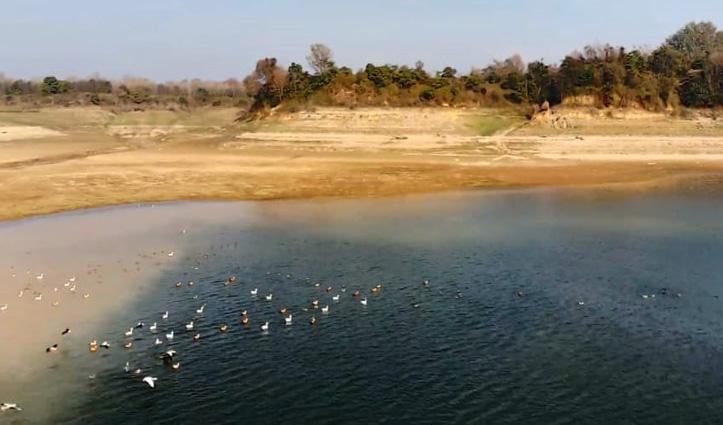 #Birdflu : पौंग झील में अब क्या हैं हालात, कितने प्रवासी पक्षी मिले मृत- जानिए
