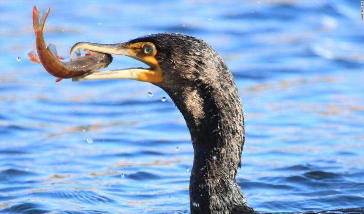 #BirdFlu: पौंग में आज 381 प्रवासी पक्षी मिले मृत, कुल आंकड़ा 3409 पहुंचा