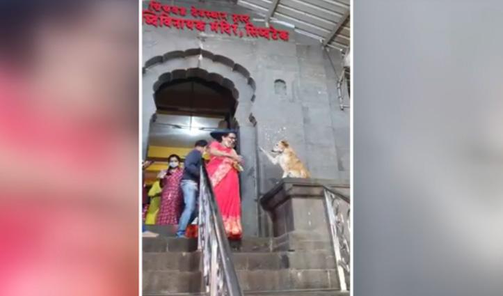 मंदिर के बाहर भक्तों को आशीर्वाद दे रहा कुत्ता, Social Media पर वीडियो हुआ वायरल