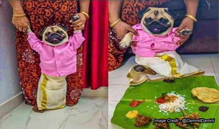 Twitter पर कुत्ते के लिए दुल्हन ढूंढ रही महिला, पोस्ट पर आ रहे ऐसे मजेदार कमेंट