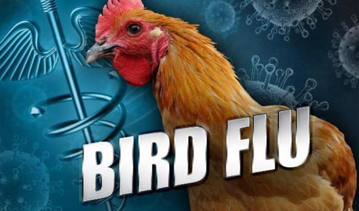 #BirdFlu_Alert: हिमाचल के इस जिला में बिना जांच डिस्पोज नहीं होगा कोई मृत पक्षी या पशु