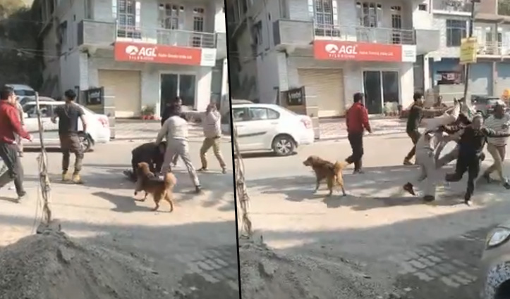 Mandi में वाहन ओवरटेक करने को लेकर झगड़ा, जमकर चले लात-घूंसे और डंडे, क्रास FIR