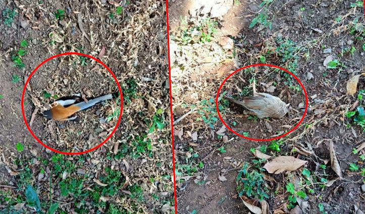 Nahan के कौलांवालाभूड़ में मृत मिले चार पक्षी, क्षेत्र में मचा हड़कंप