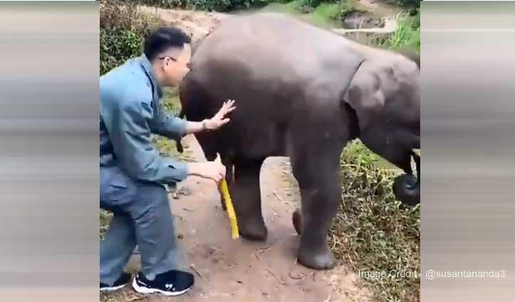 हाथी के बच्चे को गन्ना खिलाया, फिर जो पड़ी लात - Video देखकर हो जाएंगे लोटपोट