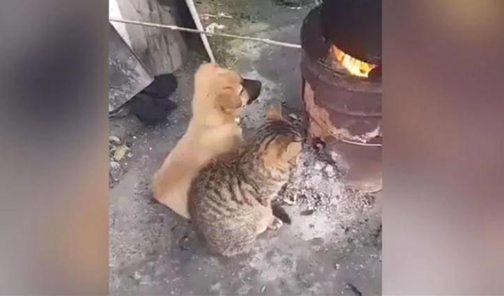 दुश्मनी भुलाकर साथ आग सेक रहे कुत्ता-बिल्ली, खूब वायरल हो रही Cute Video