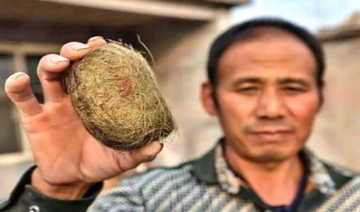 जंगली सूअर के पेट से मिली इस चीज से करोड़पति बना किसान, जानें पूरा मामला