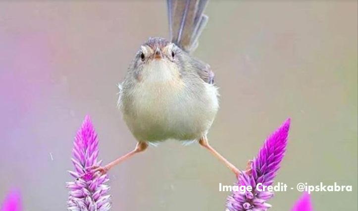 Viral हुई चिड़िया की ये फोटो, लोगों ने कहा – अजय देवगन की दिला दी याद