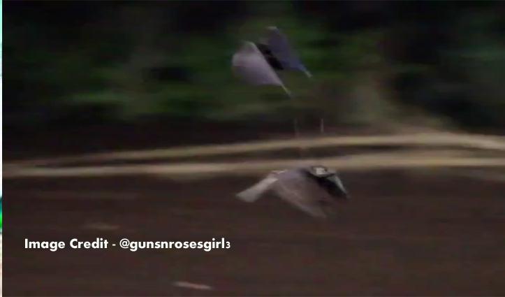 वैलेंटाइन पर प्रेमिका को रिझाने चला चिड़ा, देखो Video कैसे निकले हैं Extra पंख