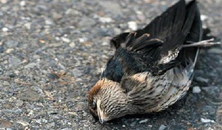 असम के इस गांव में आकर आखिर क्यों करते हैं पक्षी सुसाइड, पढ़े क्या है रहस्य
