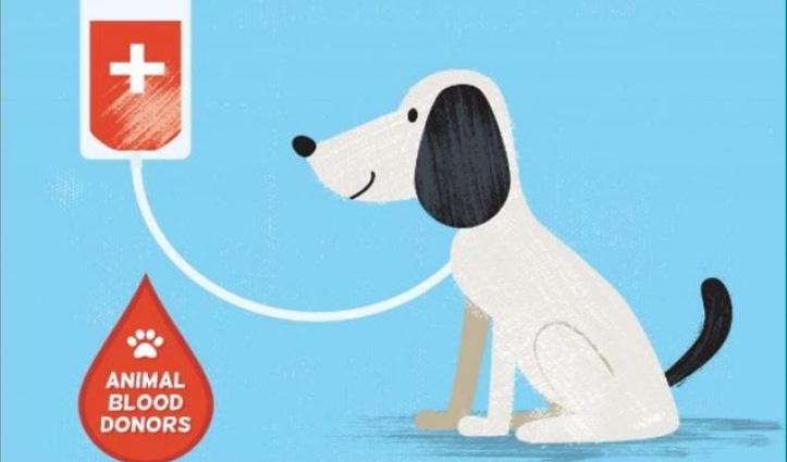 इन देशों में इंसान ही नहीं कुत्ते-बिल्ली भी करते हैं रक्तदान, मामला जानने के लिए पढ़ें पूरी खबर