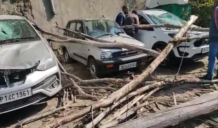 सोलनः पार्किंग में खड़ी गाड़ियों पर गिरा पेड़, कई वाहनों को हुआ नुकसान
