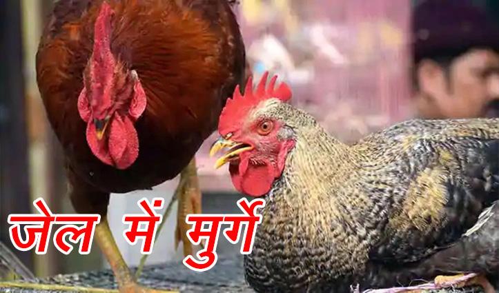वो बेगुनाह मुर्गे हैं, फिर भी उन्हें जेल में डाल रखा है-रिहाई की शर्त जानेंगे तो रोना आएगा