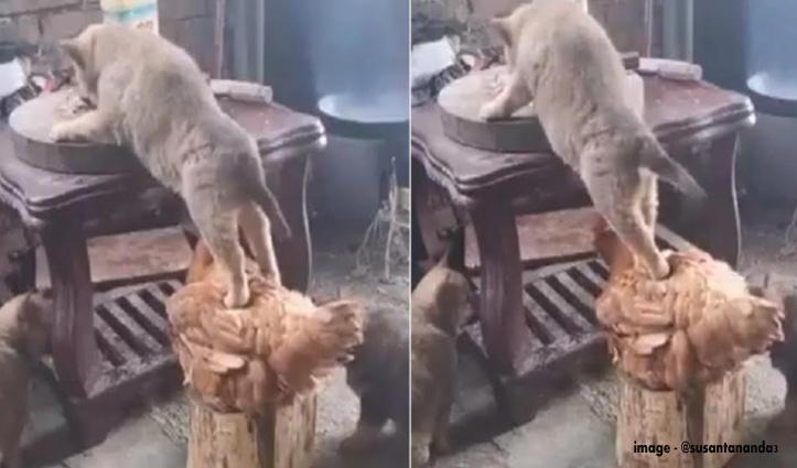 कमाल की दोस्ती : मुर्गे की पीठ पर चढ़कर कुत्ते ने खाया खाना, Cute Video हो रहा Viral