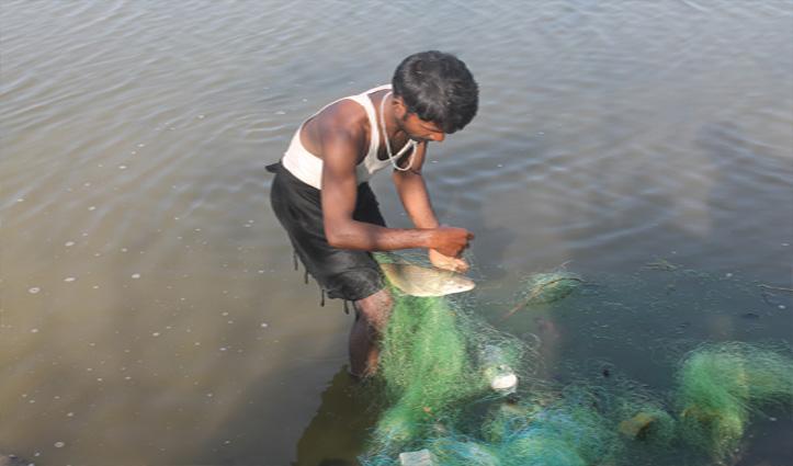 कॉरपोरेट सेक्टर छोड़ अपनाया मछली पालन, Una के राणा बंधु बने युवाओं के रोल मॉडल