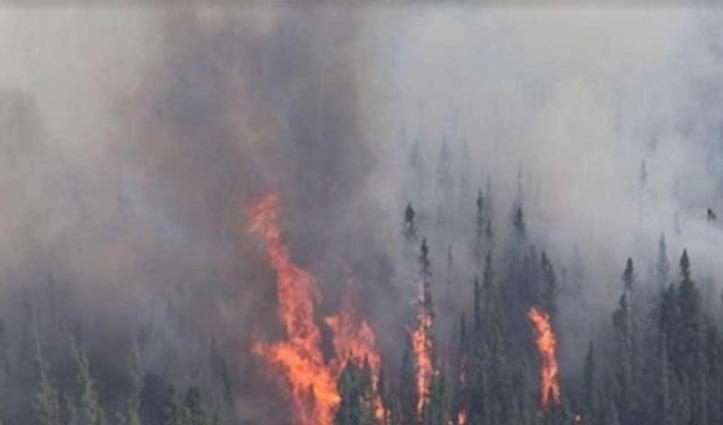 Himachal: सिरमौर में आग ने मचाया कोहराम, युवती झुलसी; तीन बैल जिंदा जले