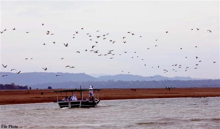 Pong में #Birdflu के चलते मछली पकड़ने पर लगी रोक हटी, DC कांगड़ा ने जारी किए आदेश