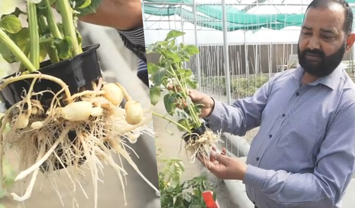 Himachal:अब सिर्फ मिट्टी ही नहीं पानी में भी उगेगा आलू, ऊना के किसान ने कर दिखाया करनामा