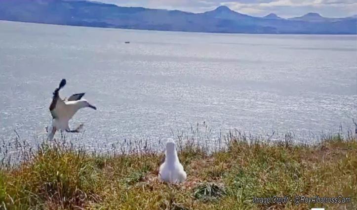 उड़ते-उड़ते जमीन पर उतरा पक्षी, खराब हो गई लैंडिंग तो मारने लगा गुलाटी, देखिए मजेदार Video