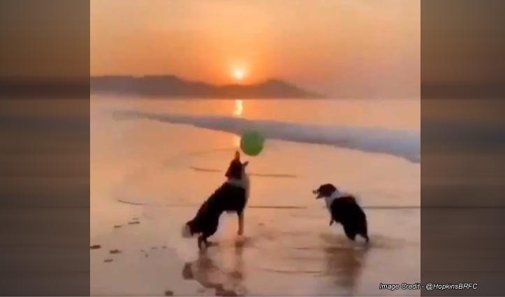 बीच पर मस्ती कर रहे दो कुत्ते, ये प्यारी वीडियो देख दिल को जरूर मिलेगा सुकून