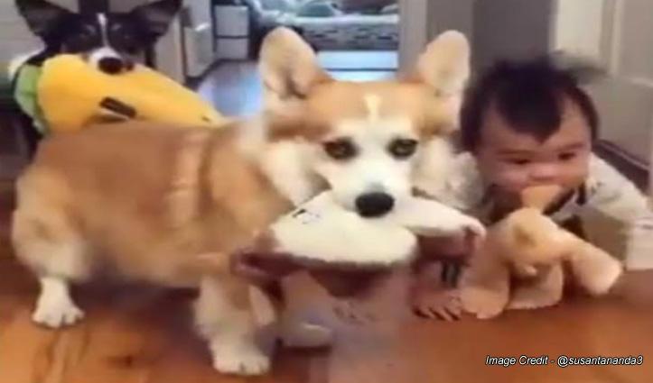 कुत्तों के साथ खेलते हुए पिल्ला बना छोटा बच्चा, क्यूट वीडियो ने जीता लोगों का दिल