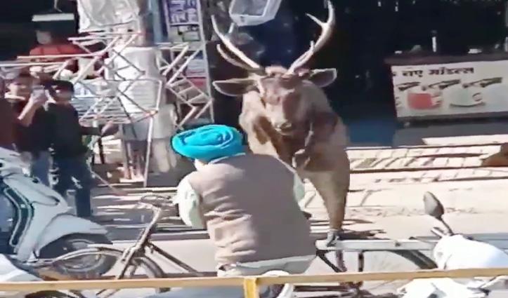 हैरत में डालने वाला है Video ,बारहसिंघा कैसे एक आदमी पर कूदा, फिर जो हुआ