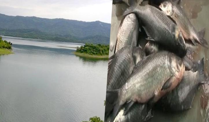 Himachal : गोविंद सागर जलाश्य में मछली बेचने के लिए अपनाई जाएगी ई-टेंडर प्रक्रिया