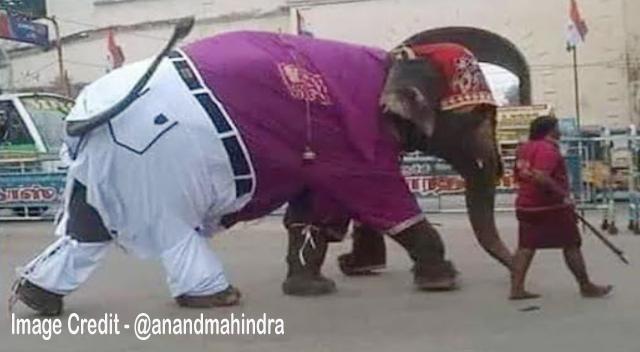 पैंट-शर्ट पहनकर सड़क पर निकला हाथी, लोग बोले - जूते तो रह ही गए