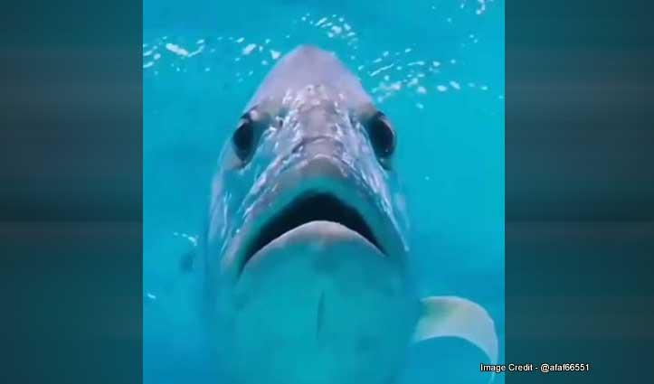 शार्क ने खतरनाक तरीके से किया उड़ते पंछी का शिकार, Video देखकर हो जाएंगे हैरान