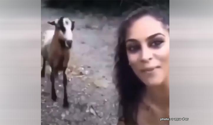 बकरी को जब आया गुस्सा-Video देखकर आप रह जाएंगे दंग,क्या ऐसा भी हो सकता है