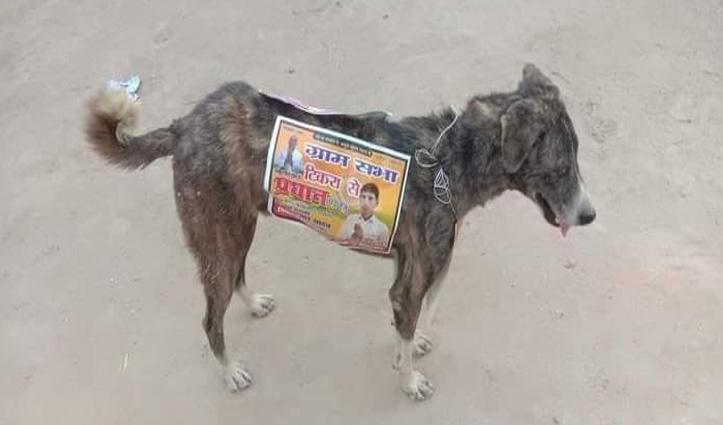 यूपी में जानवरों से भी प्रचार करवा रहे उम्मीदवार, कुत्तों की पीठ पर चिपकाए पोस्टर