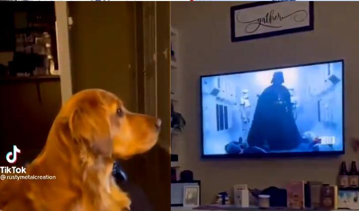 टीवी पर विलेन को देखकर कुत्ते ने दिया ऐसा रिएक्शन, वीडियो देखकर छूट जाएगी हंसी