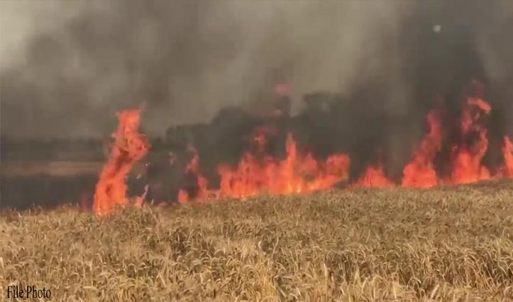 Himachal :आग ने किसानों की मेहनत पर फेरा पानी, 50 कनाल में खड़ी गेहूं की फसल राख