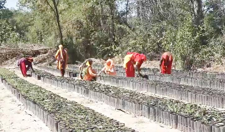 Himachal में यहां बेरोजगारों को मिलेगा रोजगार, नेशनल बैंबू मिशन के तहत प्रोजेक्ट तैयार