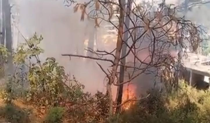 हमीरपुर में हीरानगर के जंगल में लगी आग , वन संपदा को पहुंचा नुकसान