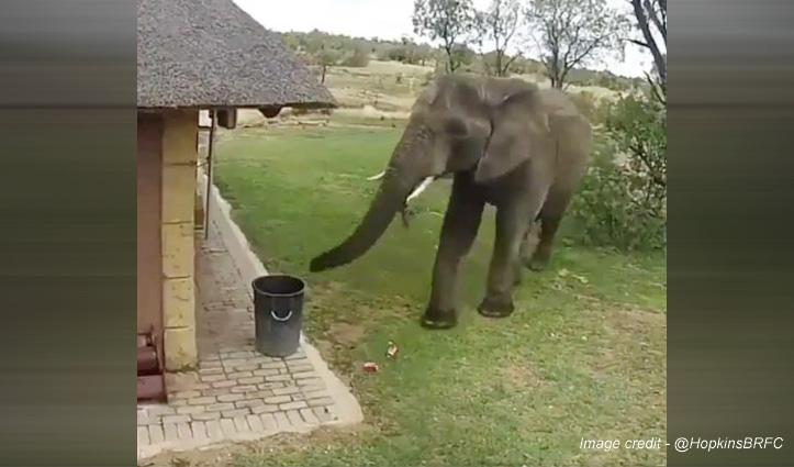 इंसानों से भी ज्यादा समझदार निकला ये हाथी, किया ऐसा काम हर कोई कर रहा सलाम