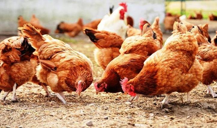मुर्गियों ने अंडे देने बंद किए तो पोल्ट्री फार्म के मालिक ने पुलिस से कर दी शिकायत