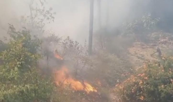 हिमाचल में दहके जंगल, आग ने गेहूं की फसल को जलाकर किया राख- लाखों का नुकसान