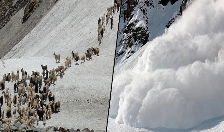 Himachal में हिमस्खलन की चपेट में आईं सैकड़ों भेड़-बकरियां, बर्फ में हुईं दफन