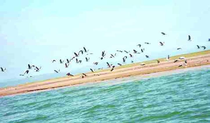 पौंग में मछली पकड़ने पर रोक, पैराग्लाइडिंग भी बंद- बाजारों को लेकर क्या निर्णय- जाने