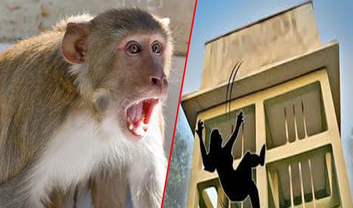 Himachal : महिला छत पर कर रही थी काम, बंदर ने कर दिया हमला – नीचे गिरी